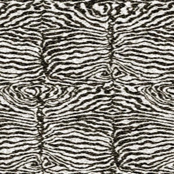 Safari Zebra